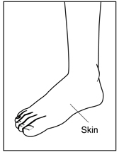 Drawing of a foot and ankle with a label pointing to the skin.